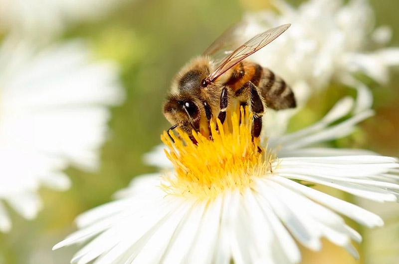 Miel-en-España-El-mercado-que-atrae-a-millones-de-abejas-en-el-mundo.