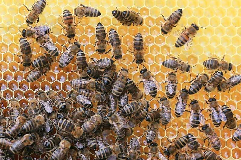 Miel-en-España-El-mercado-que-atrae-a-millones-de-abejas-en-el-mundo2
