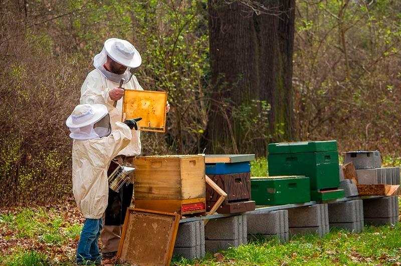 Miel-en-España-El-mercado-que-atrae-a-millones-de-abejas-en-el-mundo3